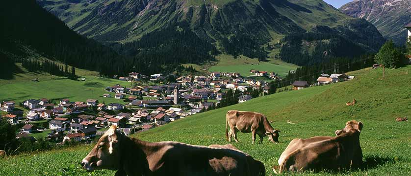 Austria_Lech-summer_fields-cows.jpg